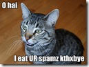 lolcat_spam